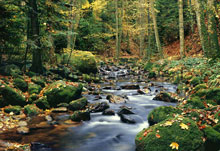 forest stream fotobehang Ideal Decor Ideal-Decor Poster 278