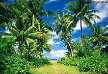 Island in the sun fotobehang Ideal Decor Ideal-Decor Poster 273