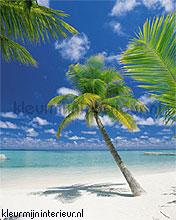 ari-atoll photomural Komar Scenics 4-883