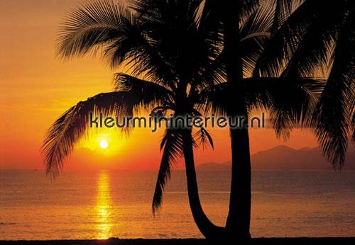 palm beach sunrise fotobehang 8-255 Scenics Komar