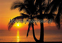 palm beach sunrise fotobehang Komar Scenics 8-255