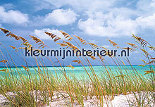 Ocean Breeze fotobehang Komar National Geographic 8-515