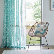Kukkia Aqua cortinas Scion todas las imágenes