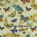 Butterfly Cloud Rainforest styles
