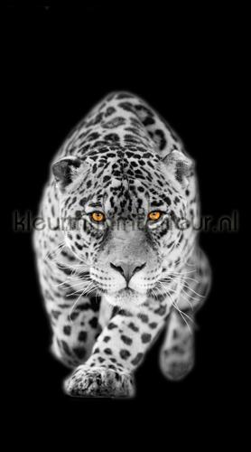 14e9b6ebd1b Panter zwart wit rideau FCS L 7503 Photoprints Kleurmijninterieur. close  window