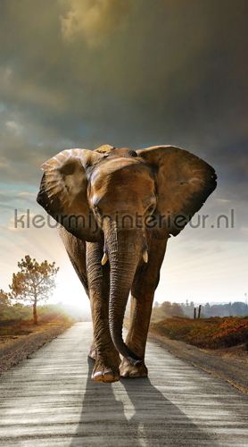 Elephant coming curtains FCS L 7507 animals Kleurmijninterieur