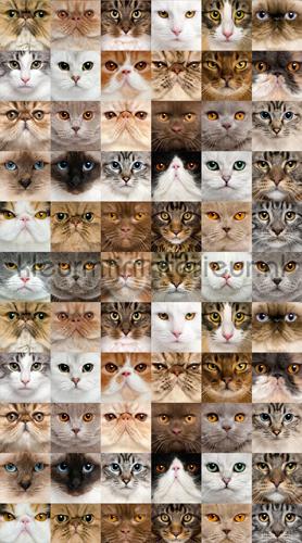 Cats curtains FCS L 7567 animals Kleurmijninterieur
