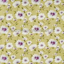 Abbotsbury kiwi cortinas Prestigious Textiles todas as imagens
