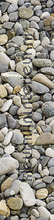 Pebbles wallstickers blomster natur