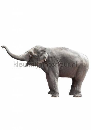 olifant decoration stickers ms-033 jungle Kek Amsterdam