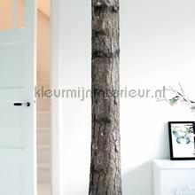 Home tree 6 decoration stickers Kek Amsterdam Sticker top 15