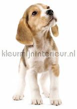 Beagle puppy interieurstickers Kek Amsterdam Baby Peuter