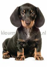 Teckel puppy interieurstickers Kek Amsterdam Baby Peuter
