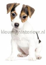 Jack russel puppy interieurstickers Kek Amsterdam Baby Peuter