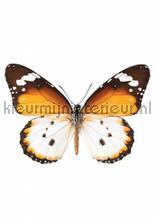 Butterfly 950 interieurstickers Kek Amsterdam meisjes