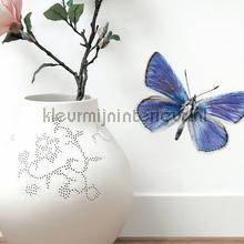 decorative selbstkleber Schmetterlinge - Vögel