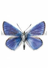 Butterfly 959 interieurstickers Kek Amsterdam meisjes