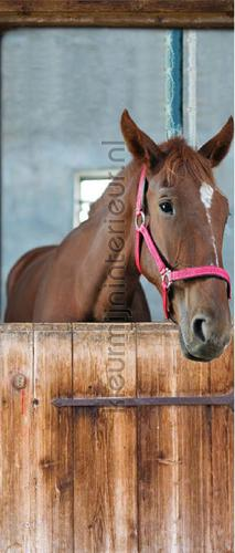 Horse in stable wallstickers 020021 door stickers AS Creation