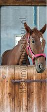 Horse in stable wallstickers AS Creation vindue stickers