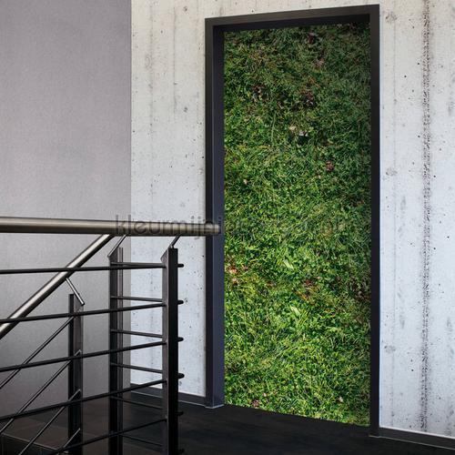 Gras sticker decorative selbstkleber 020027 türaufkleber AS Creation