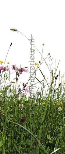 grass wallstickers 473735 door stickers AS Creation