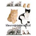 Katten stickers mureaux Komar Voitures Transport