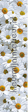 Daisy meadow wallstickers blomster natur