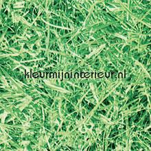 gras selvklaebende plast Gekkofix Gekkofix collectie 11563