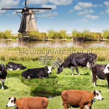 Weiland met koeien tafelzeil Kleurmijninterieur modern