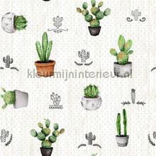 Cactussen nappes Kleurmijninterieur transparent